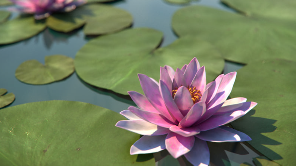 Water Lily - Model 3D Download For Free