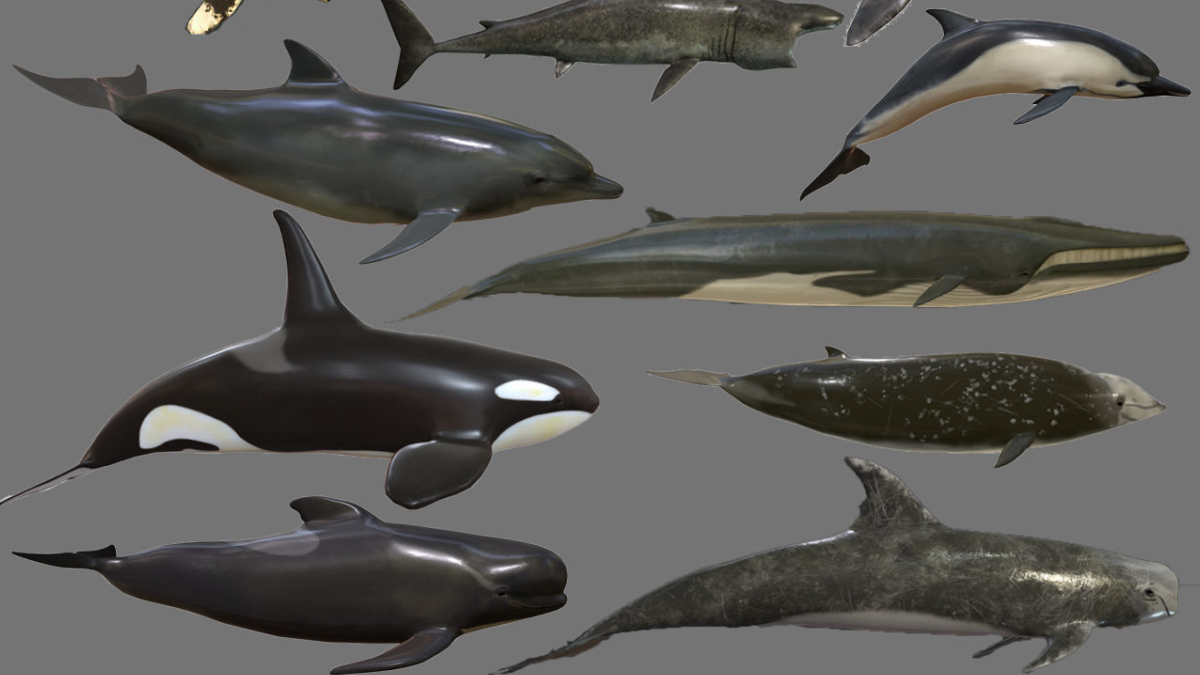 Big Fish Collection Low poly - Animated VR / AR / low-poly - Model 3D Download For Free