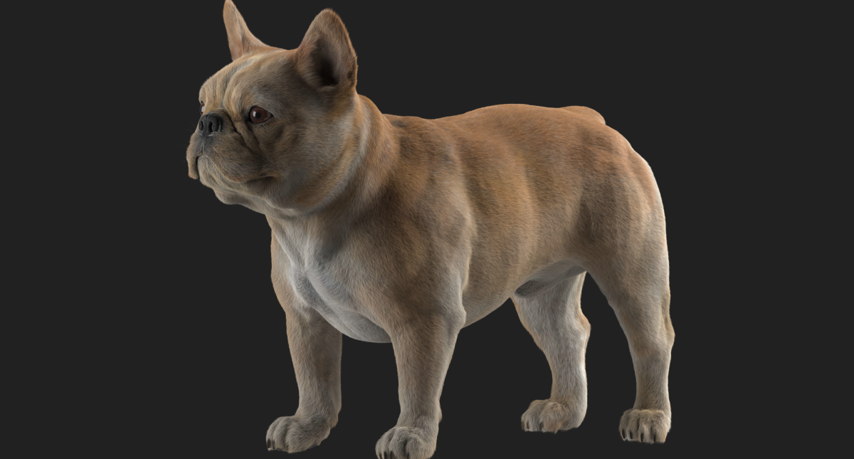 French Bulldog 3D model - Model 3D Download For Free