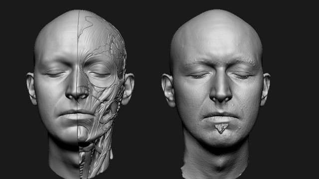 3D Anatomical Model-Reference Collection - Model 3D Download For Free