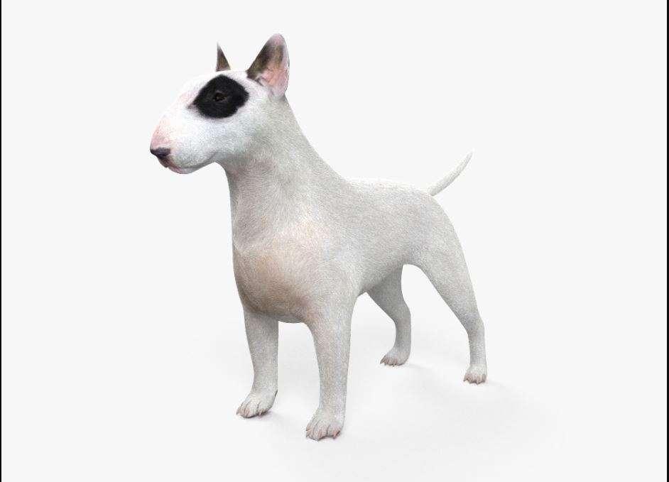 Bull Terrier 3D model - Model 3D For Free