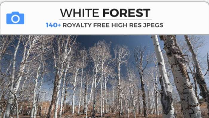 WHITE FOREST - Photobash - Image Footage