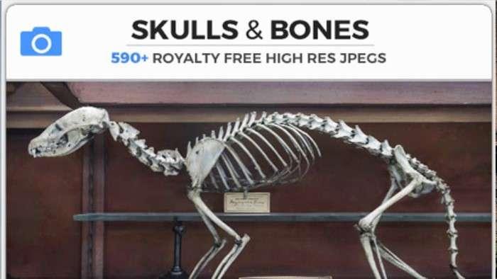 SKULLS & BONES - Photobash - Image Footage